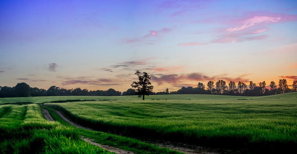 Bengeo field